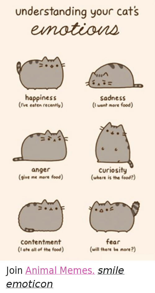Meme Smile: understanding your cats  happiness  sadness  (rve eaten recently)  (I want more food)  curiosity  anger  (where is the food?)  give me more food  contentment  fear  (I ate all of the food)  (will there be more?) Join Animal Memes. smile emoticon