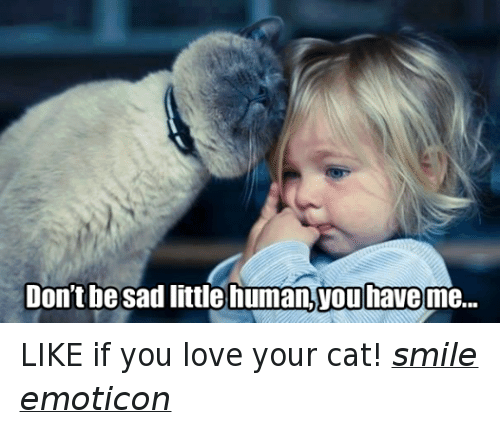 Cat Smiling: Don't be sad little human Touhaveme... LIKE if you love your cat! smile emoticon