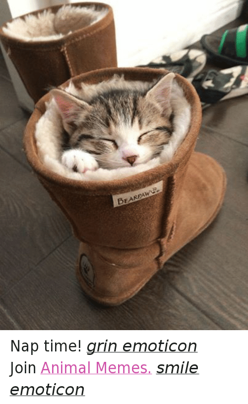 Meme Smile: BEARPAW Nap time! grin emoticon  Join Animal Memes. smile emoticon