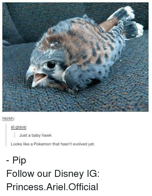 pips: hkirkh:  rave  Just a baby hawk  Looks like a Pokemon that hasn't evolved yet. - Pip Follow our Disney IG: Princess.Ariel.Official
