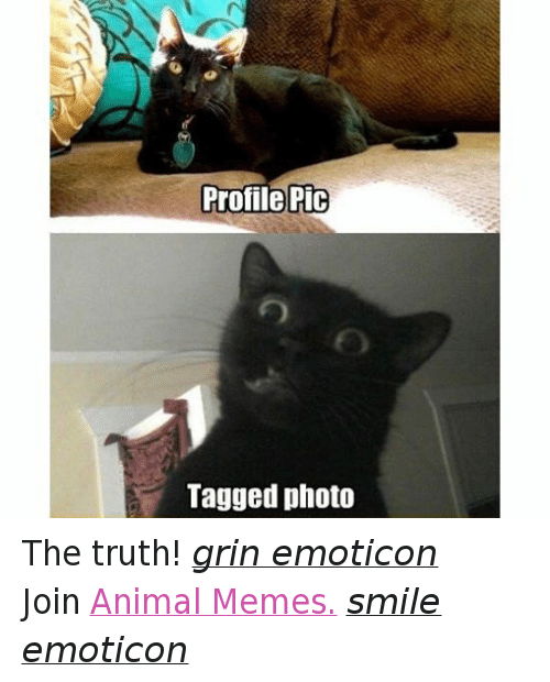 Meme Smile: Profile Pic  Tagged photo The truth! grin emoticon  Join Animal Memes. smile emoticon