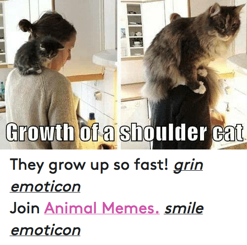 Meme Smile: Growth of a Shoulder Cat They grow up so fast! grin emoticon  Join Animal Memes. smile emoticon