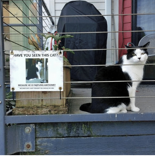 Have You Seen This Cat: HAVE YOU SEEN THIS CAT?  BECAUSE HE IS Fae%ING AWESOME!