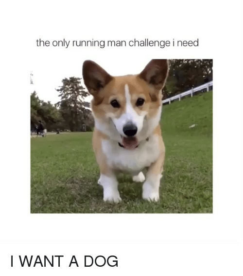 running-man-challenge: the only running man challenge i need I WANT A DOG