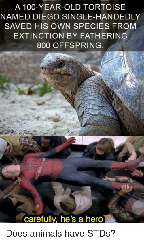 offspring: A 100-YEAR-OLD TORTOISE  NAMED DIEGO SINGLE-HANDEDLY  SAVED HIS OWN SPECIES FROM  EXTINCTION BY FATHERING  800 OFFSPRING  carefully, he's a hero Does animals have STDs?