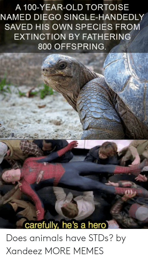 offspring: A 100-YEAR-OLD TORTOISE  NAMED DIEGO SINGLE-HANDEDLY  SAVED HIS OWN SPECIES FROM  EXTINCTION BY FATHERING  800 OFFSPRING  carefully, he's a hero Does animals have STDs? by Xandeez MORE MEMES