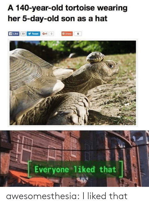 Tumblr, Blog, and Old: A 140-year-old tortoise wearing  her 5-day-old son as a hat  Like 33Y Twoet G+ 0  aShare  Everyone liked that awesomesthesia:  I liked that