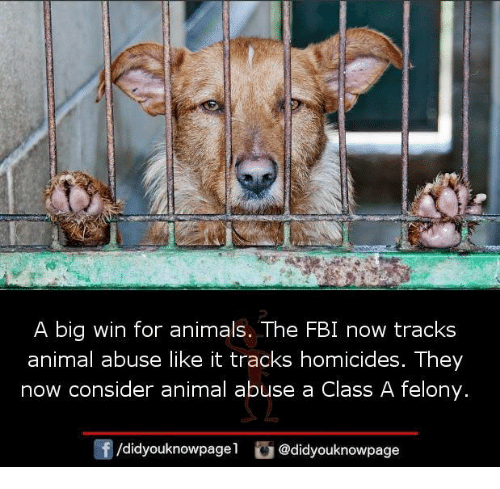 Animal Abuse: A big win for animals. The FBI now tracks  animal abuse like it tracks homicides. They  now consider animal abuse a Class A felony.  /didyouknowpagel@didyouknowpage