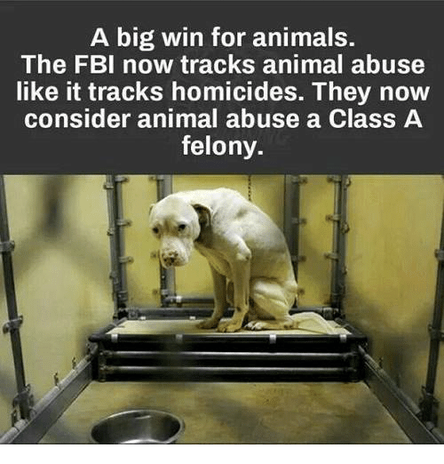 Animal Abuse: A big win for animals.  The FBI now tracks animal abuse  like it tracks homicides. They now  consider animal abuse a Class A  felony.