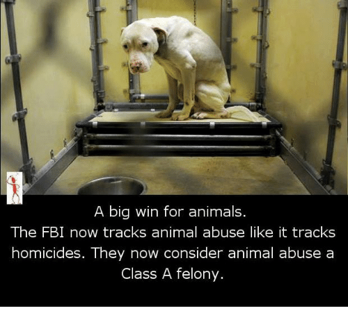 Animal Abuse: A big win for animals.  The FBI now tracks animal abuse like it tracks  homicides. They now consider animal abuse a  Class A felony