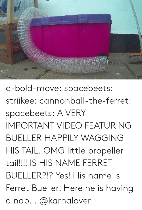tail: a-bold-move:  spacebeets:  striikee:   cannonball-the-ferret:   spacebeets:  A VERY IMPORTANT VIDEO FEATURING BUELLER HAPPILY WAGGING HIS TAIL.  OMG little propeller tail!!!!   IS HIS NAME FERRET BUELLER?!?   Yes! His name is Ferret  Bueller. Here he is having a nap…  @karnalover