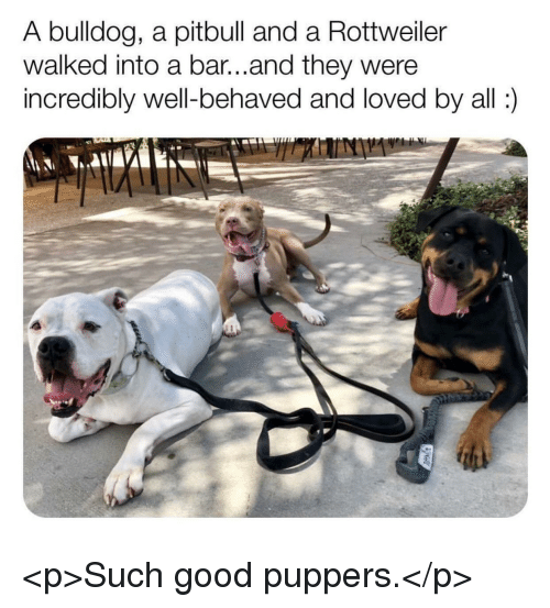 Pitbull, Bulldog, and Good: A bulldog, a pitbull and a Rottweiller  walked into a bar...and they were  incredibly well-behaved and loved by all) <p>Such good puppers.</p>