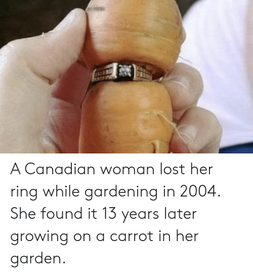 carrot: A Canadian woman lost her ring while gardening in 2004. She found it 13 years later growing on a carrot in her garden.
