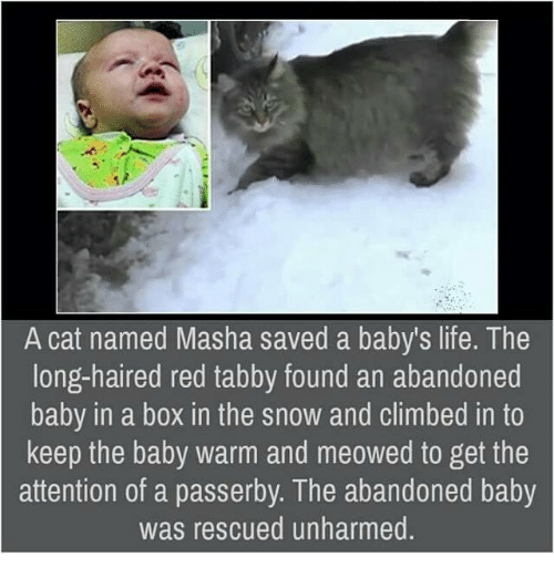 Attentation: A cat named Masha saved a baby's life. The  long-haired red tabby found an abandoned  baby in a box in the snow and climbed in to  keep the baby warm and meowed to get the  attention of a passerby. The abandoned baby  was rescued unharmed
