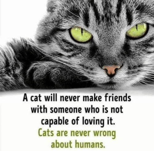 Cats, Friends, and Memes: A cat will never make friends  with someone who is not  capable of loving it  Cats are never wrong  about humans.