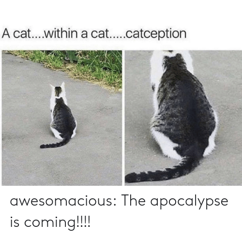Catception: A cat.. within a cat...catception awesomacious:  The apocalypse is coming!!!!