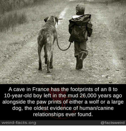 Facts, Memes, and Relationships: A cave in France has the footprints of an 8 to  10-year-old boy left in the mud 26,000 years ago  alongside the paw prints of either a wolf or a large  dog, the oldest evidence of human/canine  relationships ever found.  weird-facts.org  @factsweird