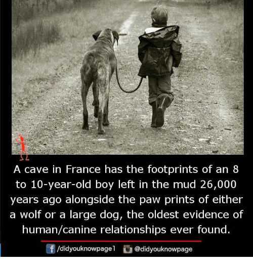Memes, Relationships, and France: A cave in France has the footprints of an 8  to 10-year-old boy left in the mud 26,000  years ago alongside the paw prints of either  a wolf or a large dog, the oldest evidence of  human/canine relationships ever found.  /didyouknowpagel  @didyouknowpage