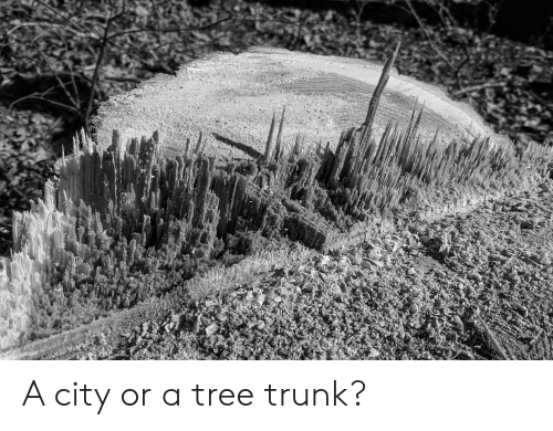 Tree, City, and Trunk: A city or a tree trunk?