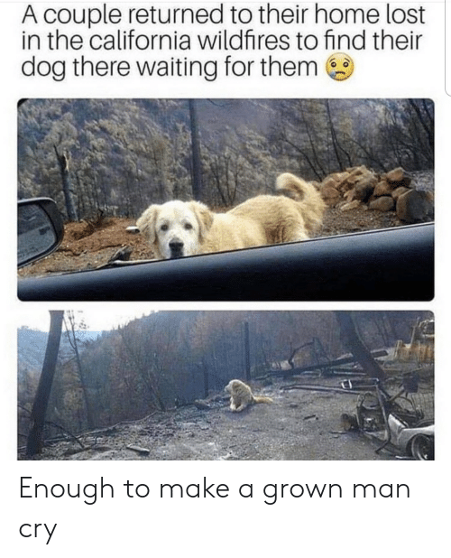 California: A couple returned to their home lost  in the california wildfires to find their  dog there waiting for them Enough to make a grown man cry