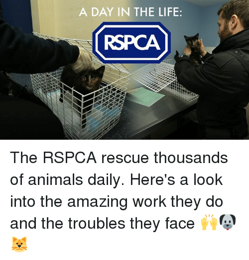 Rspca: A DAY IN THE LIFE: The RSPCA rescue thousands of animals daily. Here's a look into the amazing work they do and the troubles they face 🙌🐶🐱