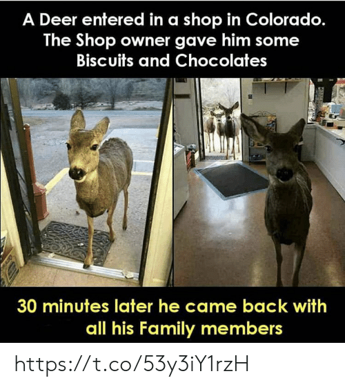 Colorado: A Deer entered in a shop in Colorado.  The Shop owner gave him some  Biscuits and Chocolates  30 minutes later he came back with  all his Family members https://t.co/53y3iY1rzH
