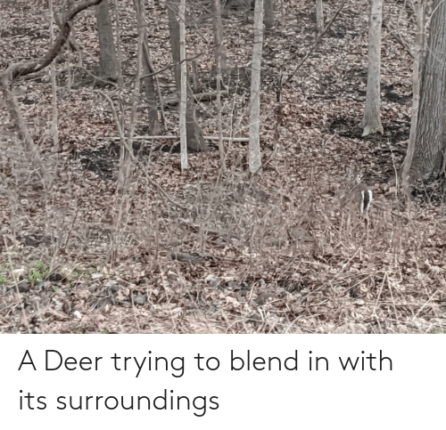 Deer: A Deer trying to blend in with its surroundings