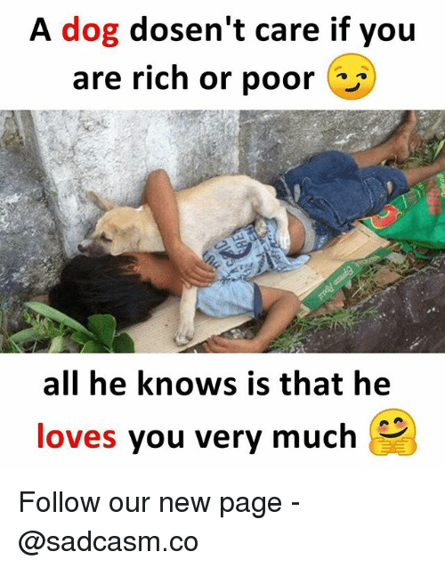 Memes, 🤖, and Page: A dog dosen't care if you  are rich or poor  all he knows is that he  loves you very much Follow our new page - @sadcasm.co