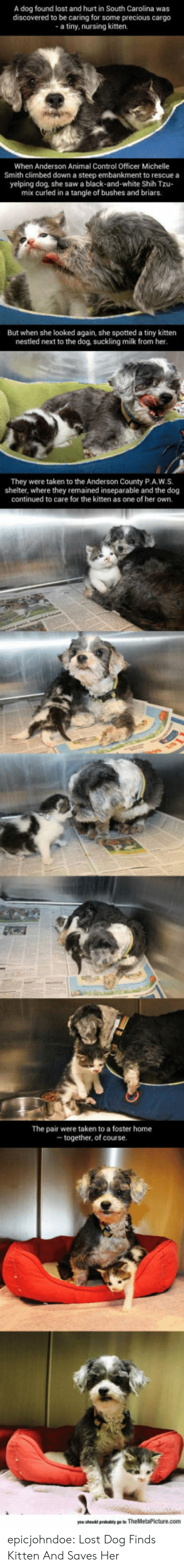 Precious, Saw, and Taken: A dog found lost and hurt in South Carolina was  discovered to be caring for some precious cargo  a tiny, nursing kitten.  When Anderson Animal Control Officer Michelle  Smith climbed down a steep embankment to rescue a  yelping dog, she saw a black-and-white Shih Tzu-  mix curled in a tangle of bushes and briars.  But when she looked again, she spotted a tiny kitten  nestled next to the dog, suckling milk from her  They were taken to the Anderson County P.A.W.S.  shelter, where they remained inseparable and the dog  continued to care for the kitten as one of her own.  The pair were taken to a foster home  together, of course epicjohndoe:  Lost Dog Finds Kitten And Saves Her