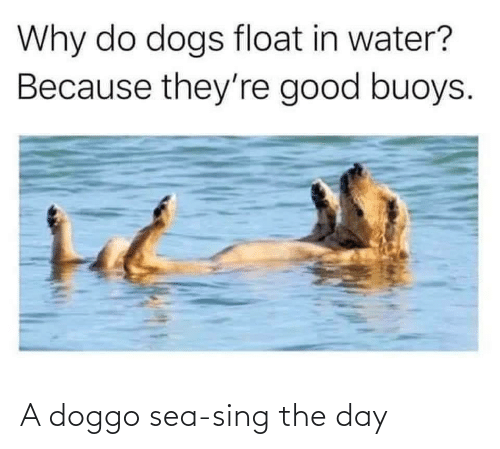 sing: A doggo sea-sing the day