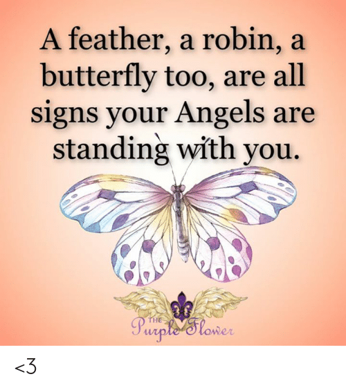 Memes, Angels, and Butterfly: A feather, a robin, a  butterfly too, are all  signs your Angels are  standing with you  THE  Purple 'Slower <3