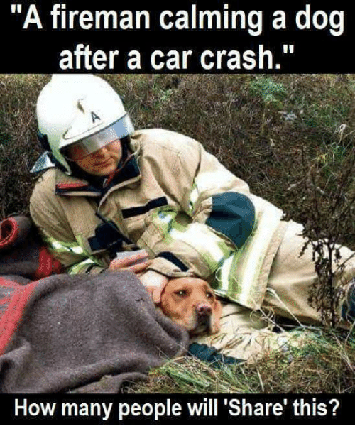 "Car Crashing: ""A fireman calming a dog  after a car crash.""  How many people will Share this?"