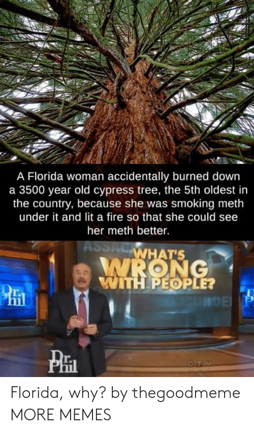 Dank, Fire, and Lit: A Florida woman accidentally burned down  a 3500 year old cypress tree, the 5th oldest in  the country, because she was smoking meth  under it and lit a fire so that she could see  her meth better.  WHAT'S  WITH PEOPLE?  r.  T. Florida, why? by thegoodmeme MORE MEMES