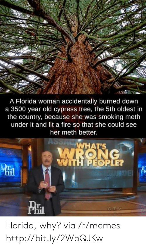 Fire, Lit, and Memes: A Florida woman accidentally burned down  a 3500 year old cypress tree, the 5th oldest in  the country, because she was smoking meth  under it and lit a fire so that she could see  her meth better.  ASSACWHAT'S  WRONG  WITH PEOPLE?  RDE P  CTV Florida, why? via /r/memes http://bit.ly/2WbQJKw