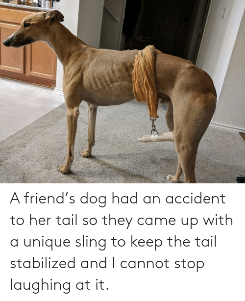 Accident: A friend's dog had an accident to her tail so they came up with a unique sling to keep the tail stabilized and I cannot stop laughing at it.