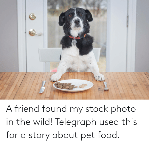 Telegraph: A friend found my stock photo in the wild! Telegraph used this for a story about pet food.