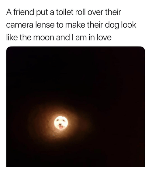 roll over: A friend put a toilet roll over their  camera lense to make their dog look  like the moon and I am in love