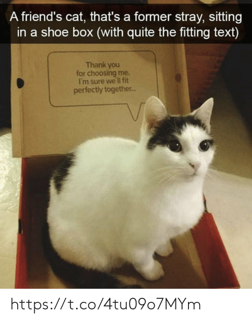fitting: A friend's cat, that's a former stray, sitting  in a shoe box (with quite the fitting text)  Thank you  for choosing me.  I'm sure we lI fit  perfectly together.. https://t.co/4tu09o7MYm