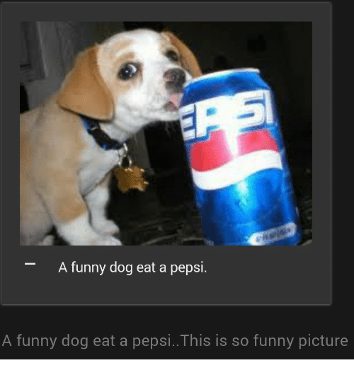 funny picture: A funny dog eat a pepsi.  A funny dog eat a pepsi..This is so funny picture