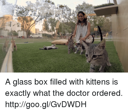 Doctors Orders: A glass box filled with kittens is exactly what the doctor ordered. http://goo.gl/GvDWDH