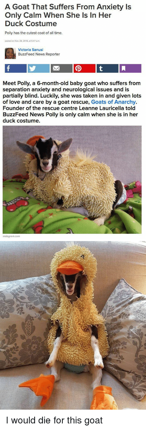 Instagram, Love, and News: A Goat That Suffers From Anxiety Is  Only Calm When She Is In Her  Duck Costume  Polly has the cutest coat of all time.  posted on Nov 28, 2016, at 5:47 a.m.  Victoria Sanusi  BuzzFeed News Reporter   Meet Polly, a 6-month-old baby goat who suffers from  separation anxiety and neurological issues and is  partially blind. Luckily, she was taken in and given lots  of love and care by a goat rescue, Goats of Anarchy.  Founder of the rescue centre Leanne Lauricella told  BuzzFeed News Polly is only calm when she is in her  duck costume.  instagram.com <p>I would die for this goat<br/></p>