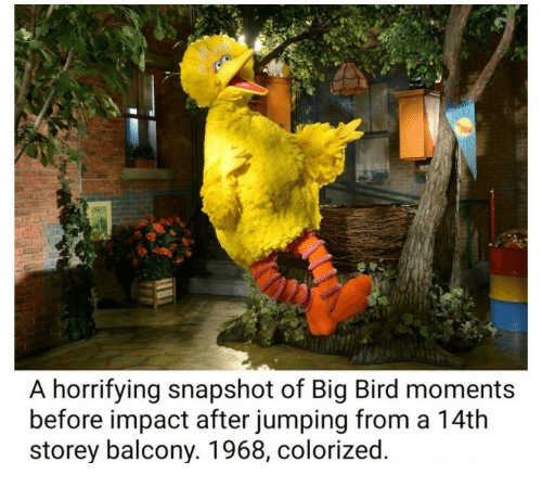 A Horrifying Snapshot Of Big Bird Moments Before Impact