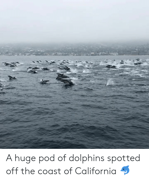 pod: A huge pod of dolphins spotted off the coast of California 🐬