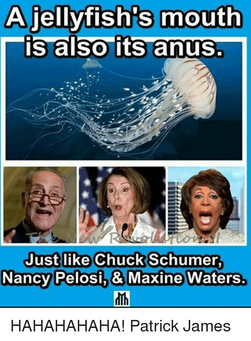 Maxine: A jellyfish's mouth  is also its anus.  Justlike Chuck Schumer  NancyPelosi,& Maxine Waters. HAHAHAHAHA!  Patrick James