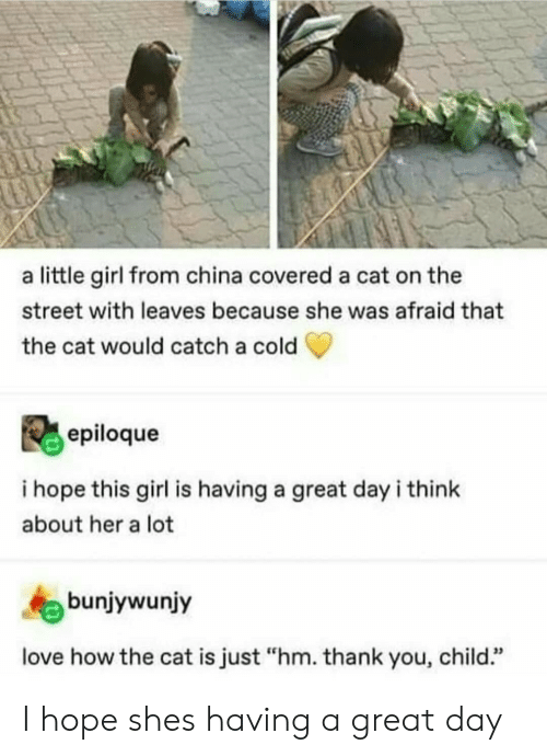 """Love, China, and Thank You: a little girl from china covered a cat on the  street with leaves because she was afraid that  the cat would catch a cold  epiloque  i hope this girl is having a great dayi think  about her a lot  bunjywunjy  love how the cat is just """"hm. thank you, child."""" I hope shes having a great day"""