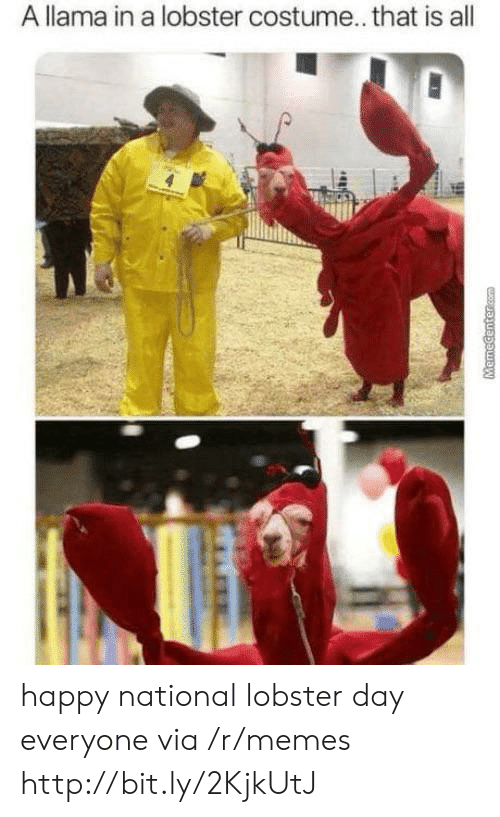 lobster: A llama in a lobster costume.. that is all  MemeCenter.com happy national lobster day everyone via /r/memes http://bit.ly/2KjkUtJ