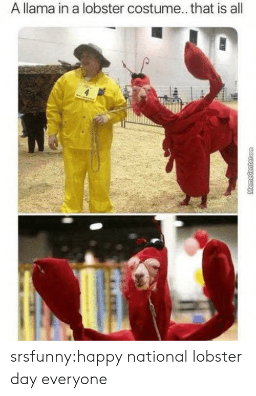 lobster: A llama in a lobster costume... that is all  MHR  MemeCentercom srsfunny:happy national lobster day everyone
