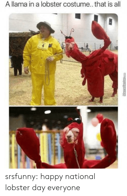 lobster: A llama in a lobster costume... that is all  MHR  MemeCentercom srsfunny:  happy national lobster day everyone