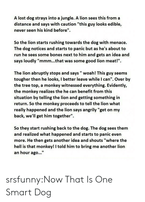 "Smartly: A lost dog strays into a jungle. A lion sees this from a  distance and says with caution ""this guy looks edible,  never seen his kind before""  So the lion starts rushing towards the dog with menace.  The dog notices and starts to panic but as he's about to  run he sees some bones next to him and gets an idea and  says loudly ""mmm...that was some good lion meat!""  The lion abruptly stops and says woah! This guy seems  tougher then he looks, I better leave while I can"". Over by  the tree top, a monkey witnessed everything. Evidently,  the monkey realizes the he can benefit from this  situation by telling the lion and getting something in  return. So the monkey proceeds to tell the lion what  really happened and the lion says angrily ""get on my  back, we'll get him together"".  So they start rushing back to the dog. The dog sees them  and realized what happened and starts to panic even  more. He then gets another idea and shouts ""where the  hell is that monkey! I told him to bring me another lion  an hour ago..."" srsfunny:Now That Is One Smart Dog"