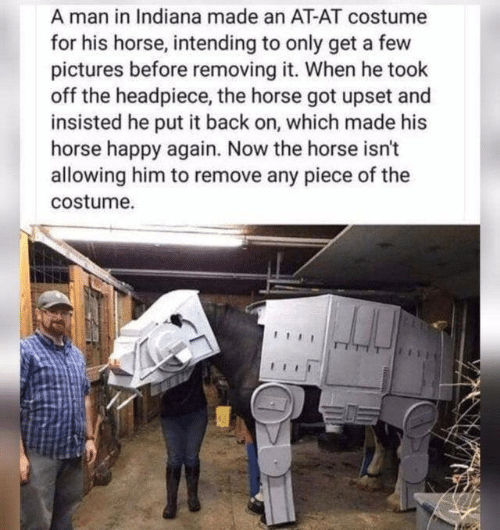 When He: A man in Indiana made an AT-AT costume  for his horse, intending to only get a few  pictures before removing it. When he took  off the headpiece, the horse got upset and  insisted he put it back on, which made his  horse happy again. Now the horse isn't  allowing him to remove any piece of the  costume.